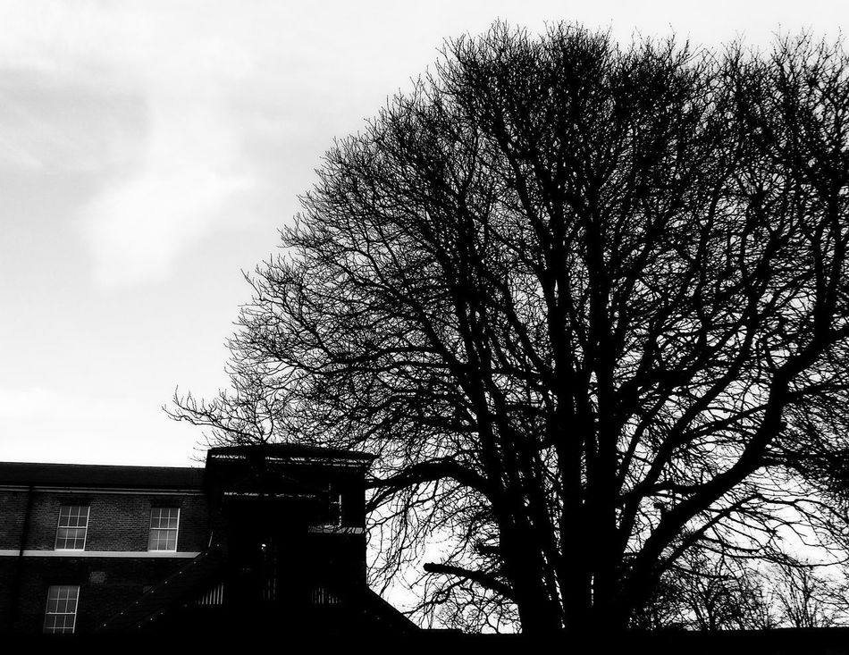 Architecture Bare Tree Building Exterior Built Structure Day House Low Angle View Nature No People Outdoors Sky Tree