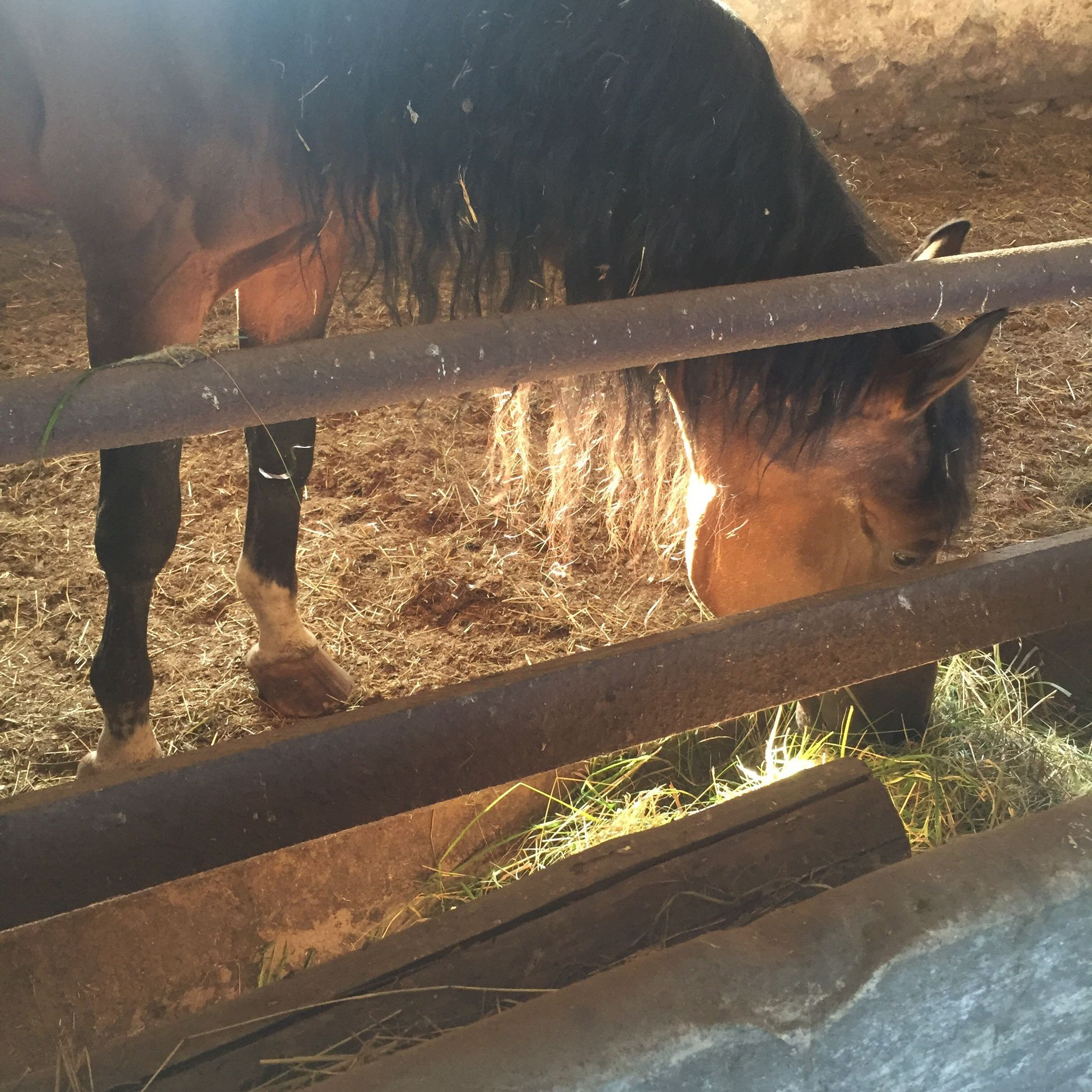 Wood - Material Outdoors Day Mammal Livestock Domestic Animals Horse Mylove Cutehorses Lovehorse