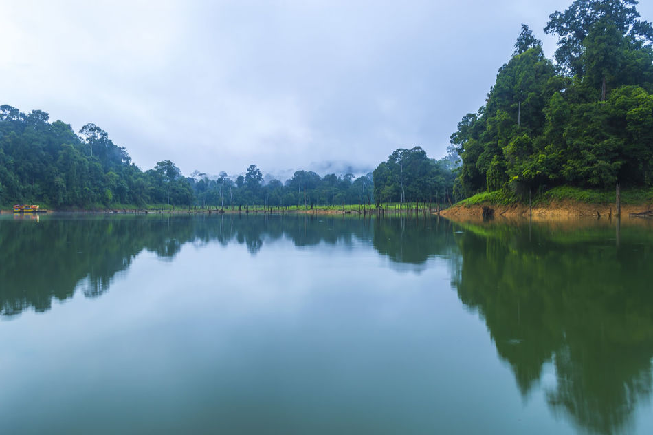 Beauty In Nature Dam Day Death Tree Forest Hi Lake Lake View Nature Nature Outdoors Rainforest Reflection River Tree Water