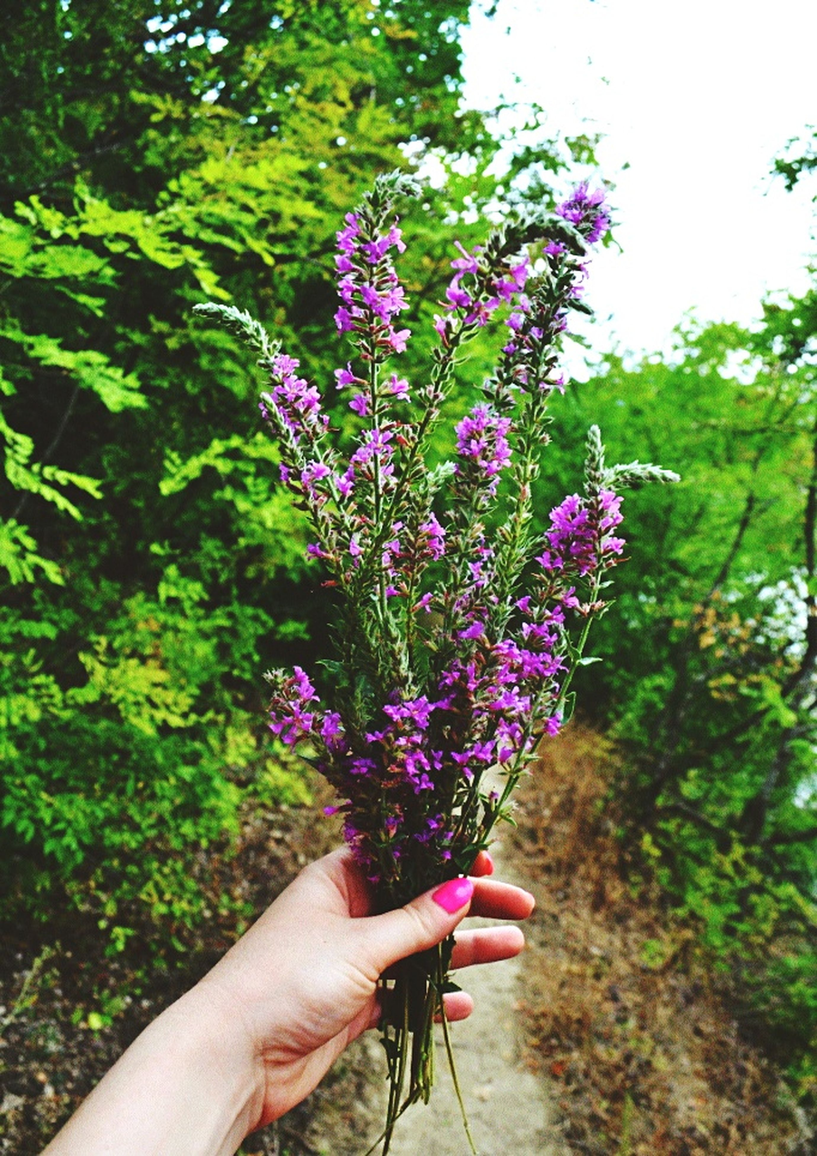 person, flower, holding, part of, freshness, growth, tree, lifestyles, unrecognizable person, cropped, leisure activity, personal perspective, fragility, plant, human finger, nature, beauty in nature