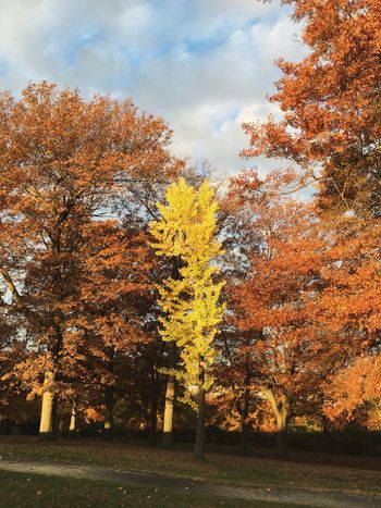 Trees TreePorn Fall Colors Autumn Colors