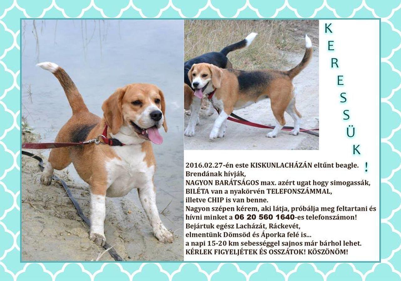 Keressük, ha bármi infód van keress... Animal Dog Domsod Kiskunlacháza Majosháza Rackeve Szigetcsép Szigetszentmárton Áporka