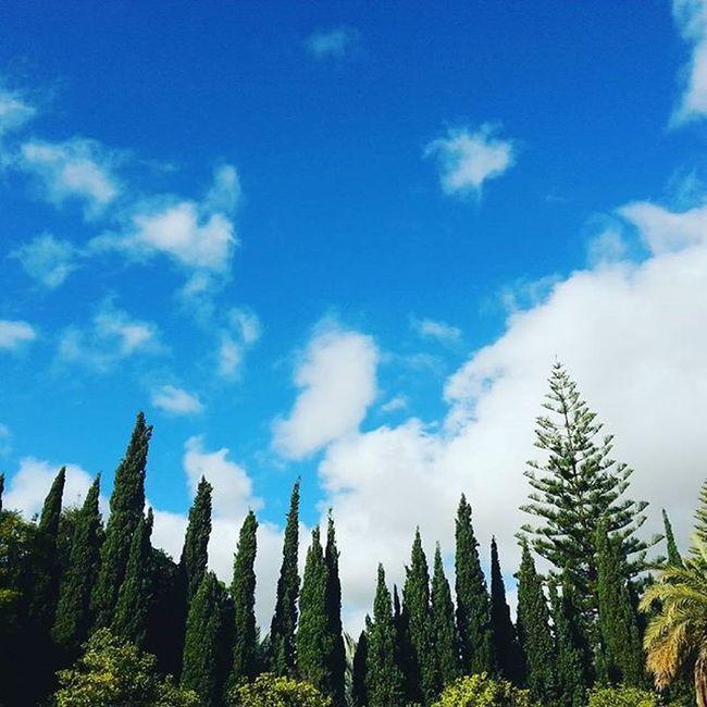 """100happydays Me recuerda a """"Los Alpes"""" 😊 Pedazo de cielo azul 🌲⛅🌲😁 Cieloazul Nubes Despejado Pedazodedia Arboles Abetos Cipreses Avenidaalvarodomecq Jerezdelafrontera Merecuerdaalos Alpes"""