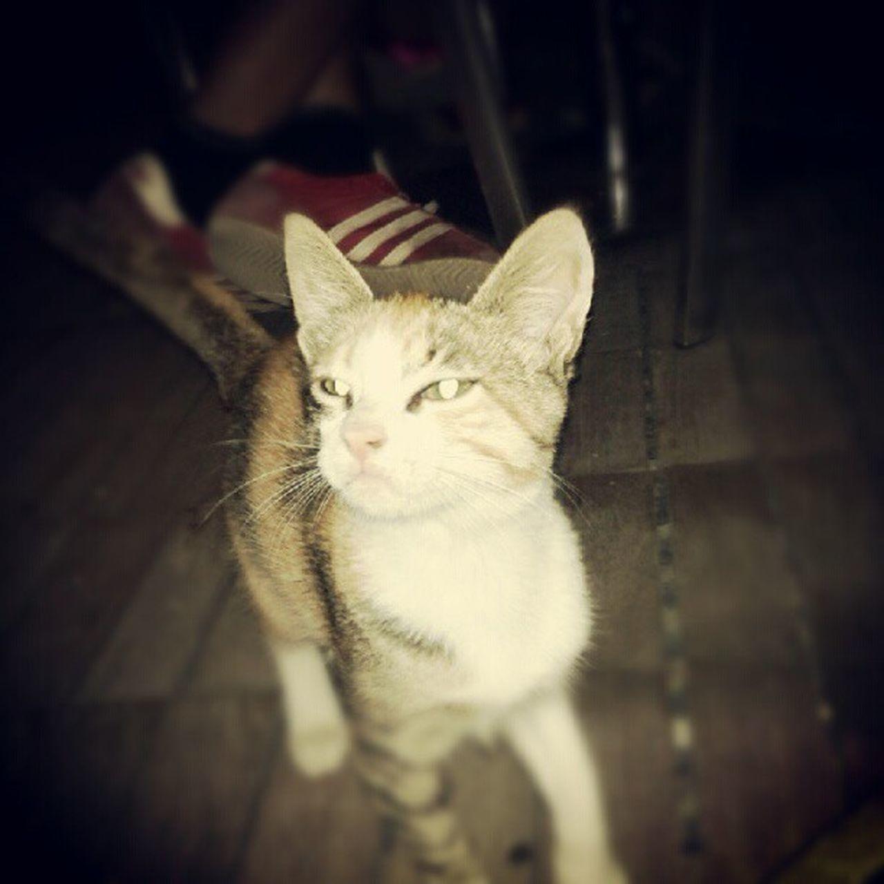 Kitty LikeABOSS