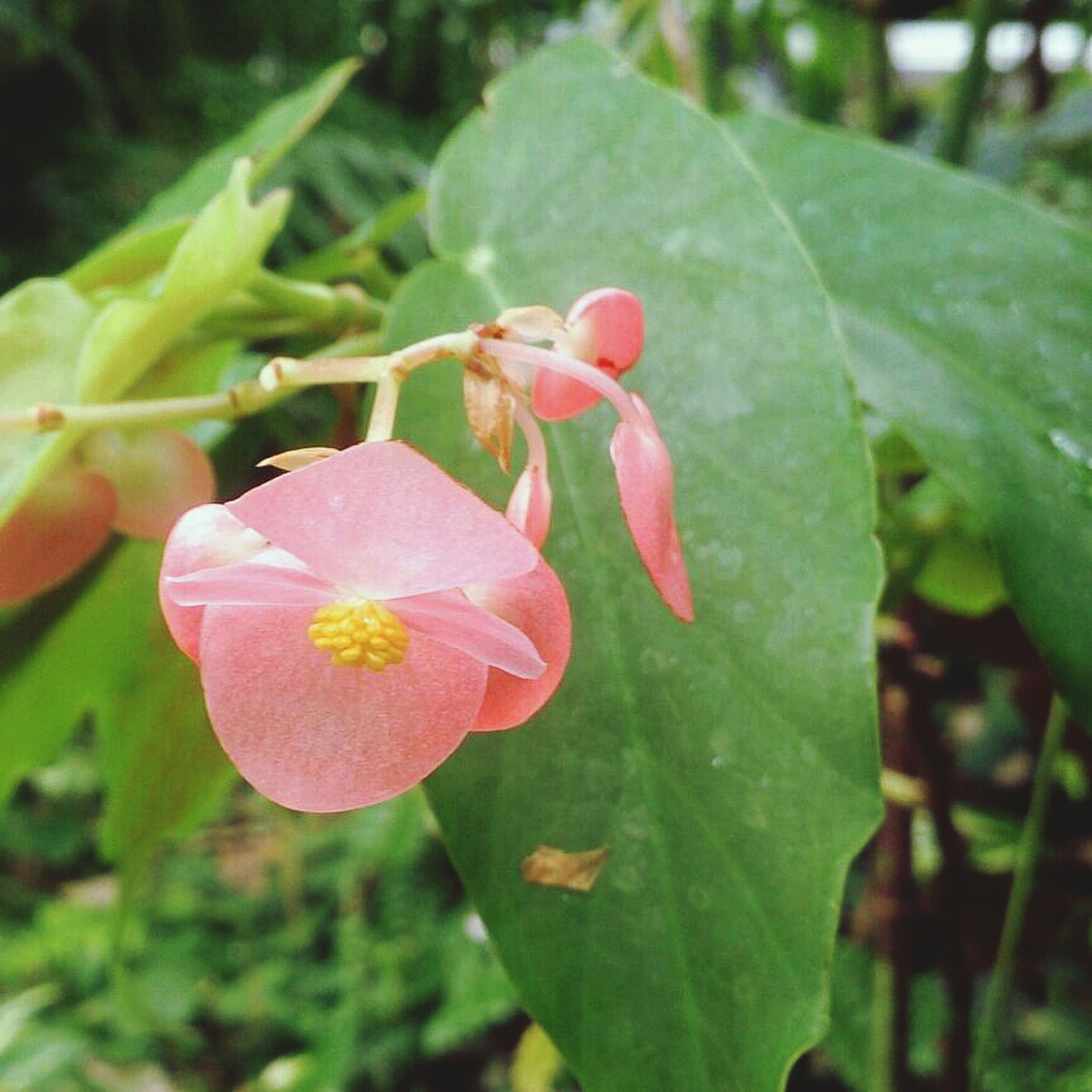 flower, freshness, growth, leaf, petal, fragility, focus on foreground, close-up, beauty in nature, plant, flower head, nature, green color, red, blooming, bud, selective focus, day, outdoors, no people