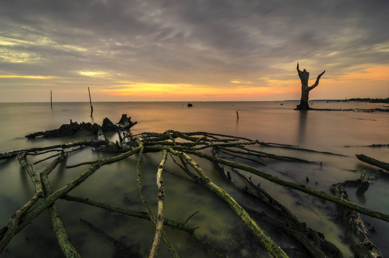Death of mangroves Beach Cloudy Creepy Dead Deforestation Destroyed Dramatic Dusk Ecology Ecosystem  Effect Erosion Mangroves Nature No People Roots Silhouette Stump Sunset Tranquil Tree Tropical Wood