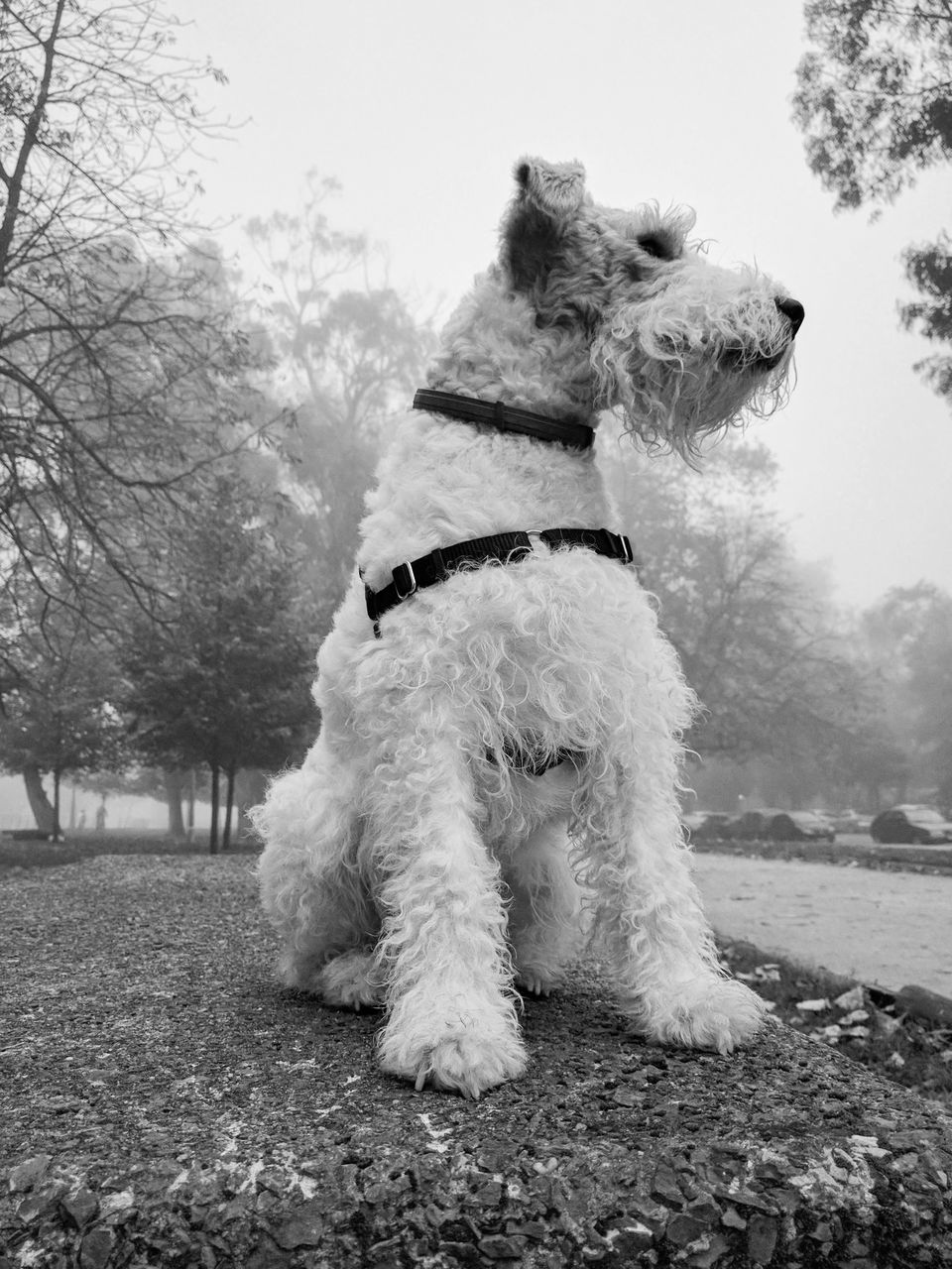 dog, pets, domestic animals, animal themes, mammal, one animal, field, tree, day, outdoors, grass, sky, no people, west highland white terrier, nature