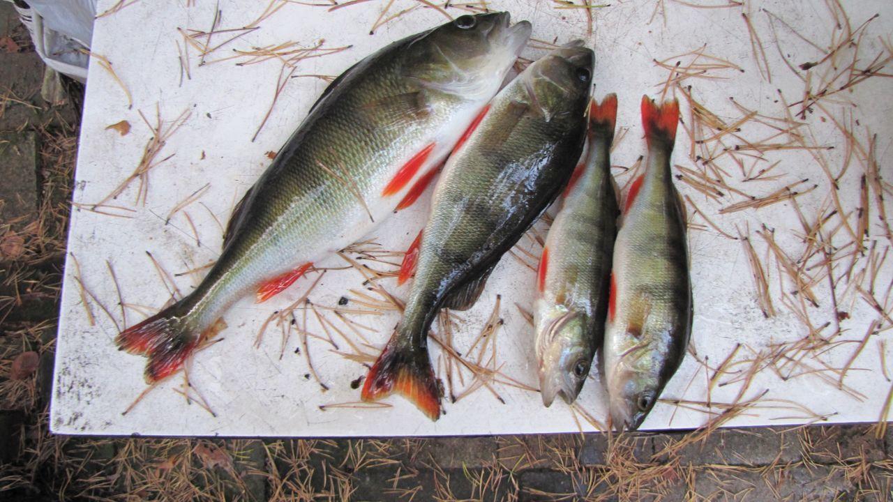 Beautiful stock photos of fish, Close-Up, Display, Fish, Food