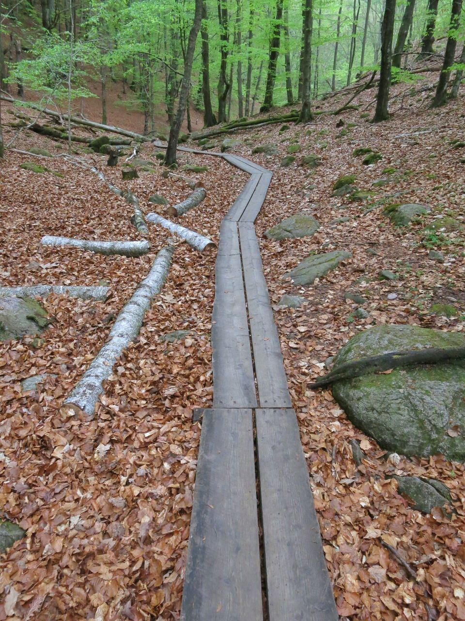 Narrow wooden pathway in the forest