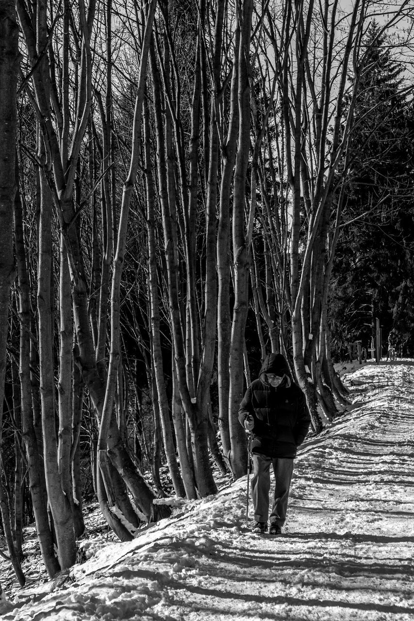 rear view, full length, walking, tree, real people, one person, nature, road, winter, standing, the way forward, bare tree, forest, day, outdoors, branch, people