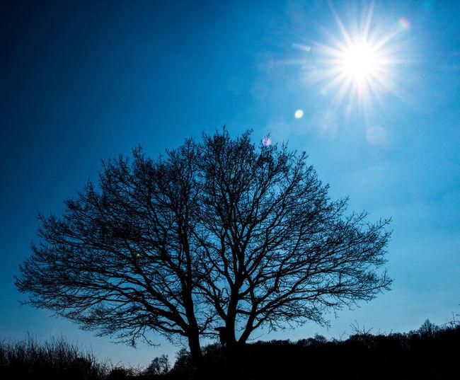 Blue Blue Sky Branch Day Nature No People Outdoors Shade Shades Of Nature Sky Sun Sunbeam Sunbeam Through The Trees Sunbeams Sunbeams Through Tree Sunlight Sunlight ☀ Tree Trees Trees And Nature Trees And Sky Treescollection The Great Outdoors - 2017 EyeEm Awards