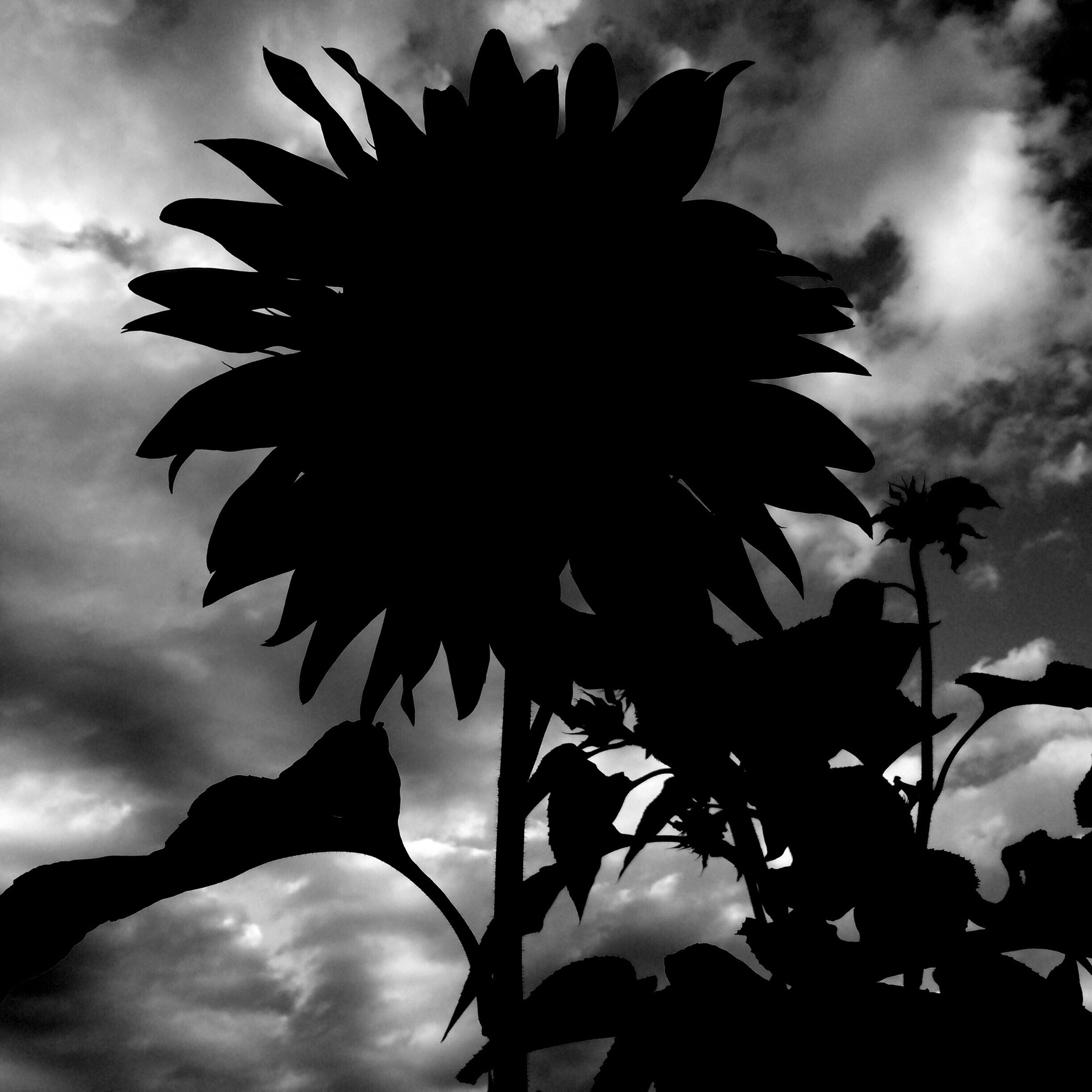sky, low angle view, growth, cloud - sky, leaf, beauty in nature, nature, cloud, flower, cloudy, silhouette, plant, tree, tranquility, close-up, fragility, outdoors, freshness, no people, day