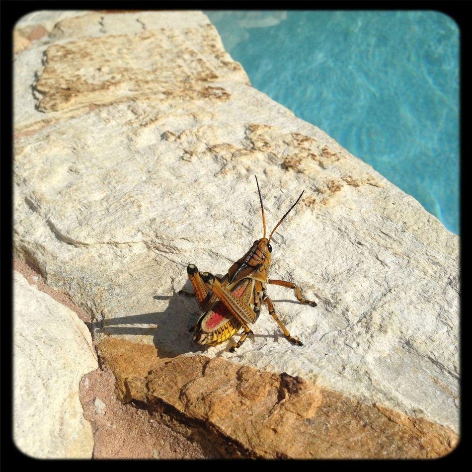 Jiminy Cricket!