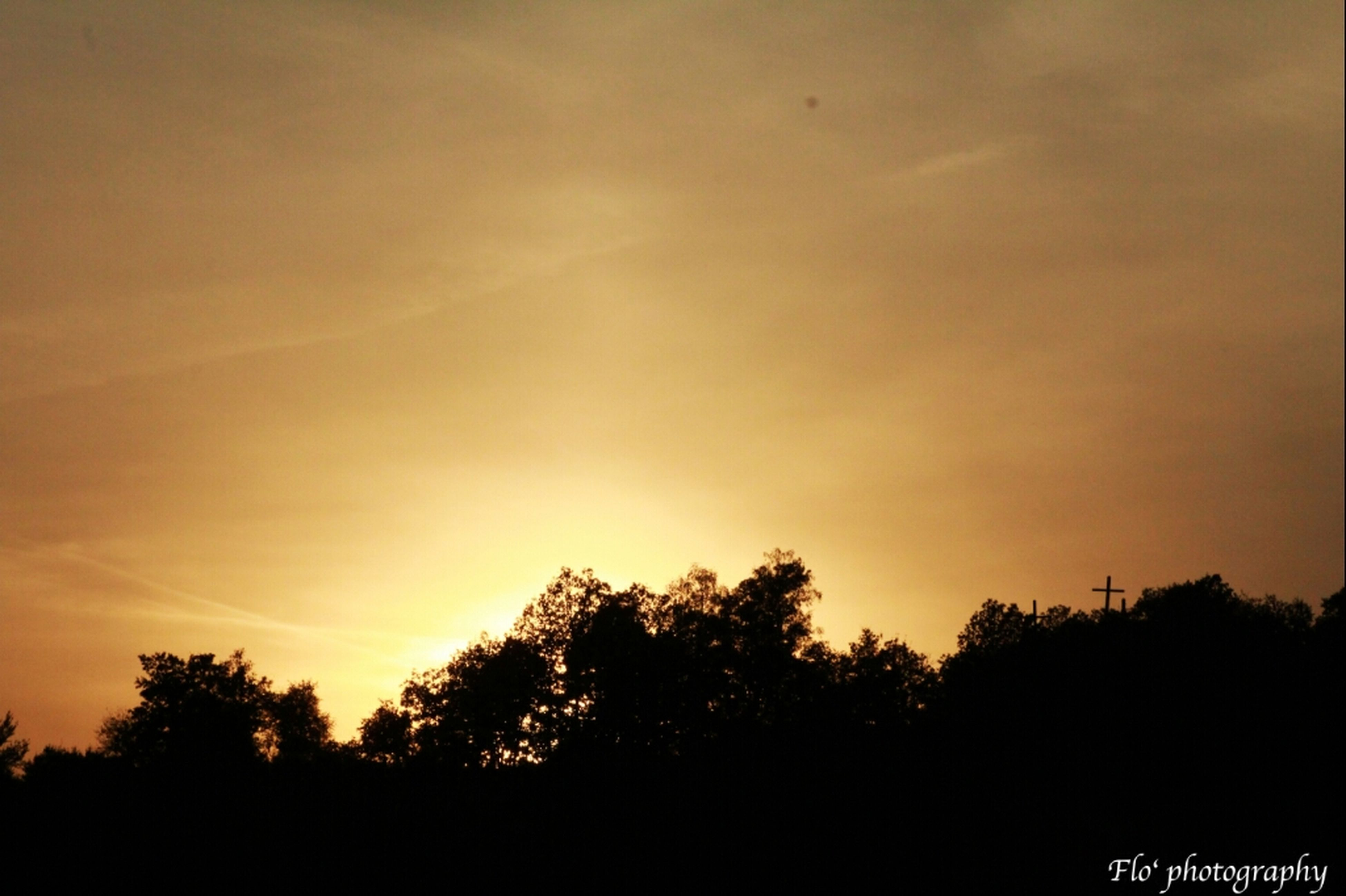 silhouette, sunset, tree, beauty in nature, scenics, tranquility, tranquil scene, sky, nature, orange color, idyllic, growth, copy space, sun, landscape, outdoors, low angle view, no people, outline, sunlight