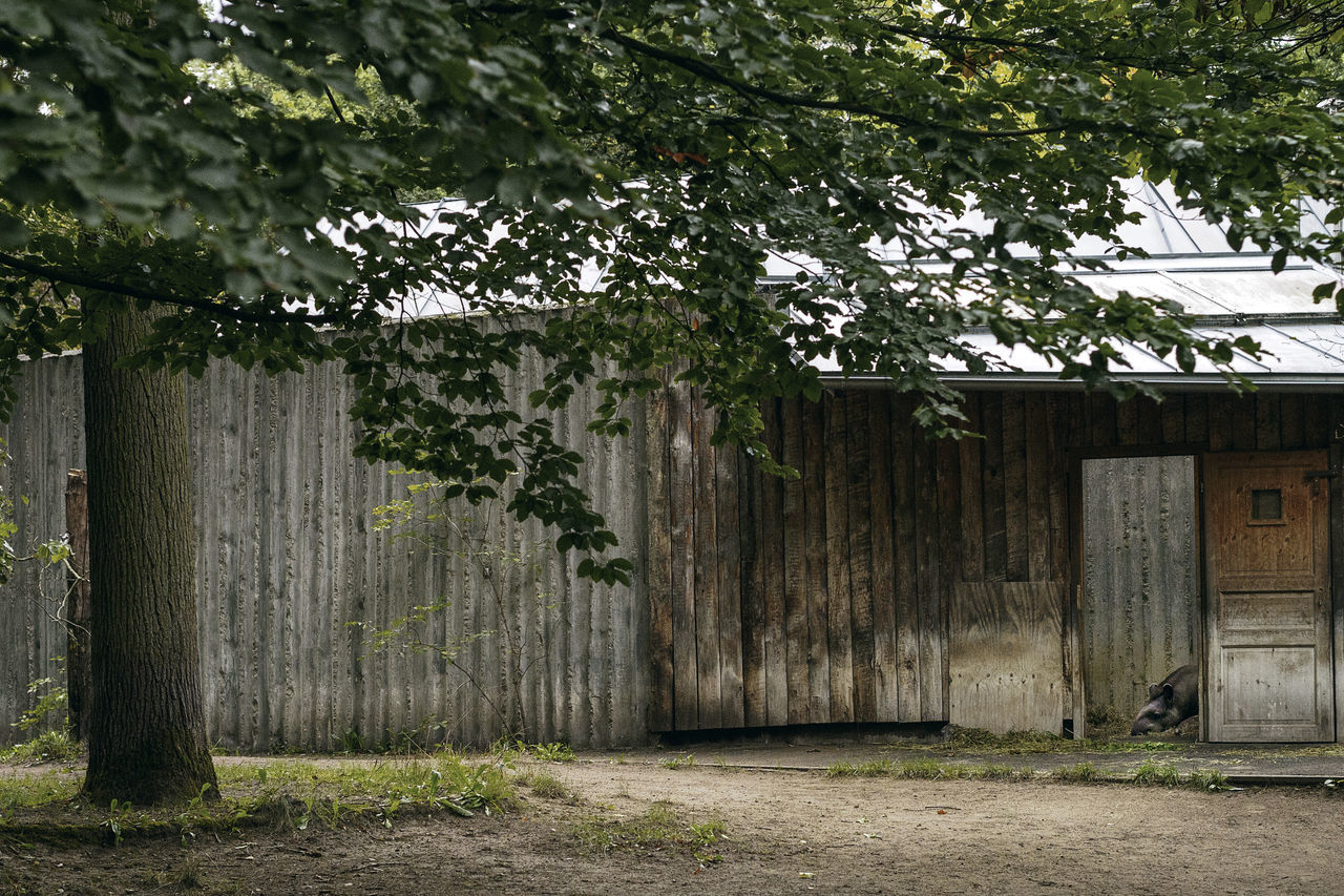 Barn By Tree On Field