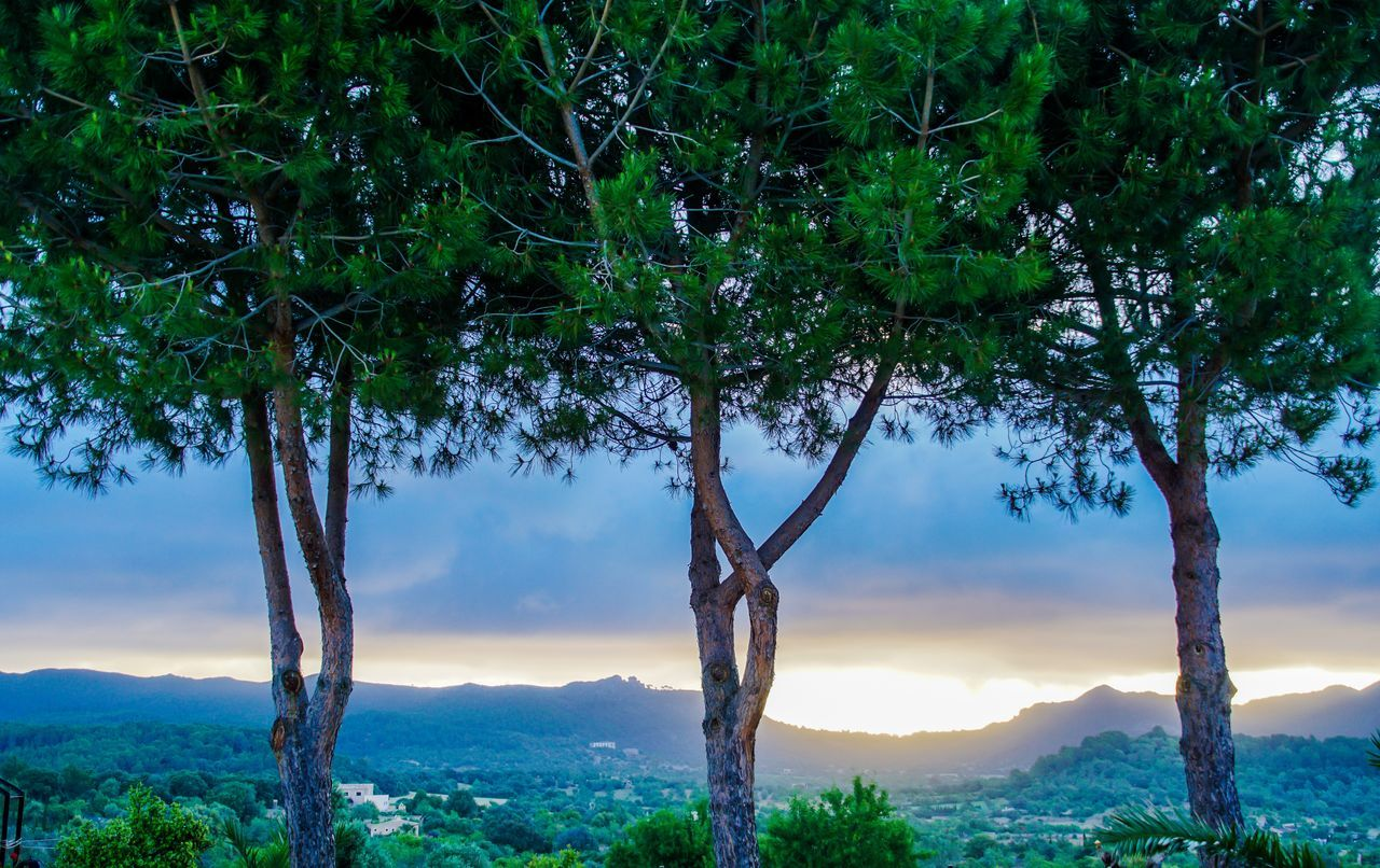 Beauty In Nature Branch Day Foreground Forest Green Color Growth Landscape Mountain Mountain Range Nature No People Outdoors Scenics Sky Sunrise Sunset Tranquil Scene Tranquility Tree Tree Trunk Water The Great Outdoors