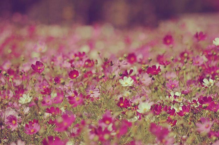 Keicomoment Colors Of Autumn Love Nature Flowers