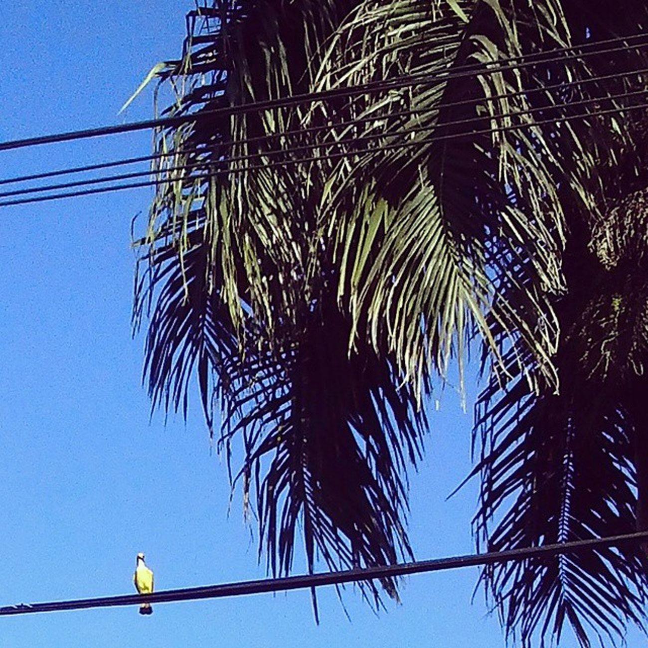 Bird. Bluesky Fotografandooceu Thewaytowork Lgl9