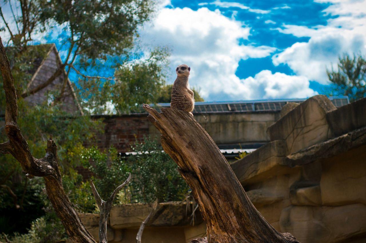 Animals Zoo Sky Eyem Best Shots My Best Photo 2014 Spring Into Spring