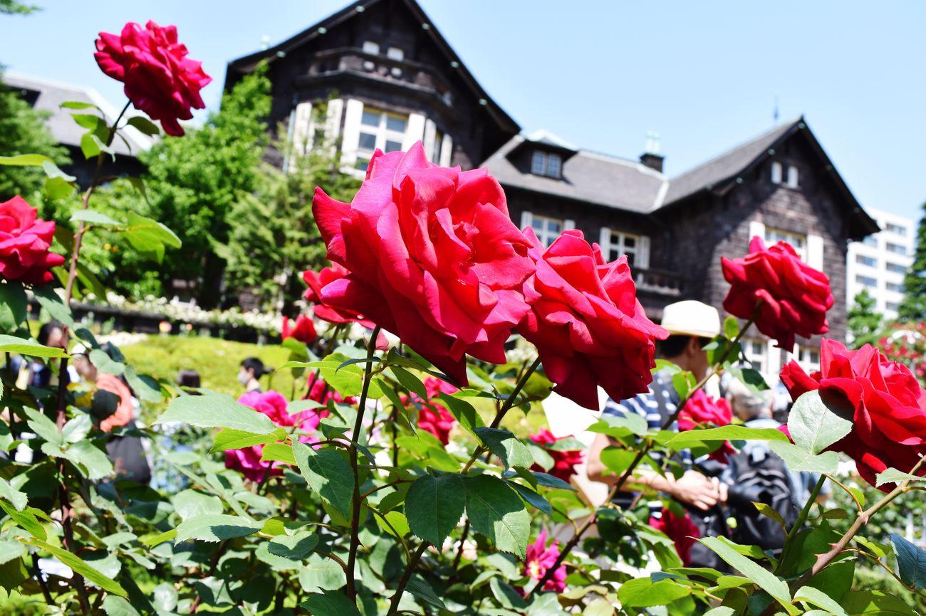 旧古河庭園のバラ rRoses First Eyeem Photo