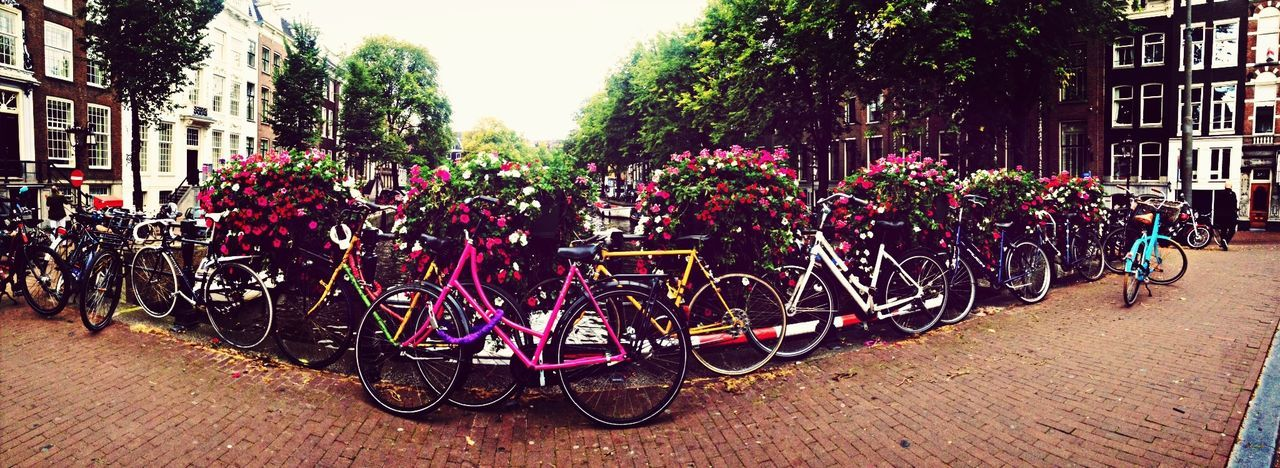 bicycle, building exterior, transportation, outdoors, architecture, mode of transport, built structure, land vehicle, bicycle rack, day, stationary, real people, large group of people, men, tree, group of people, city, people