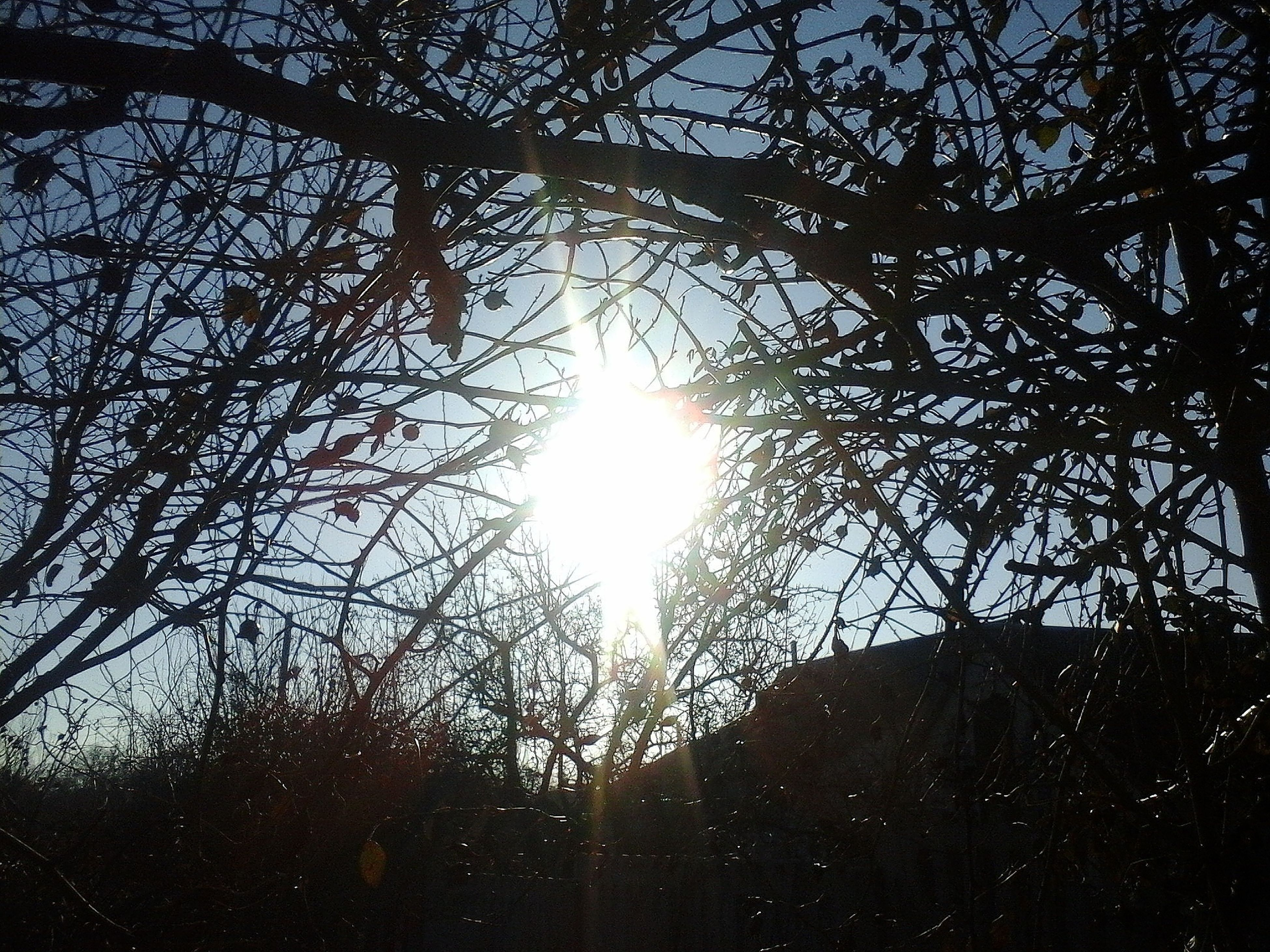 sunlight, sun, lens flare, low angle view, sunbeam, sky, nature, tree, beauty in nature, outdoors, growth, no people, sunset, day, refraction