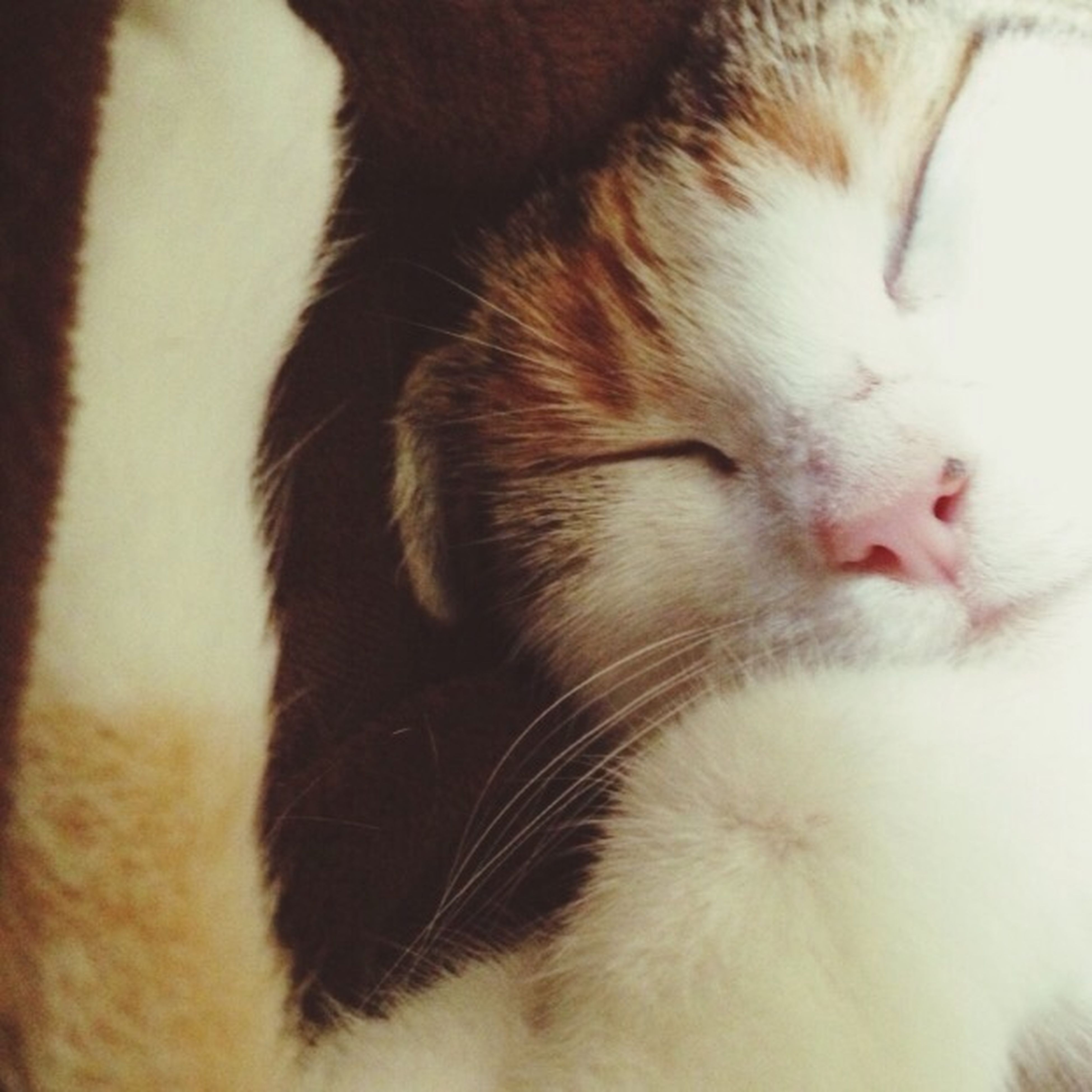 domestic cat, cat, domestic animals, pets, feline, animal themes, mammal, one animal, indoors, whisker, close-up, relaxation, sleeping, animal head, animal body part, eyes closed, resting, part of, lying down, no people