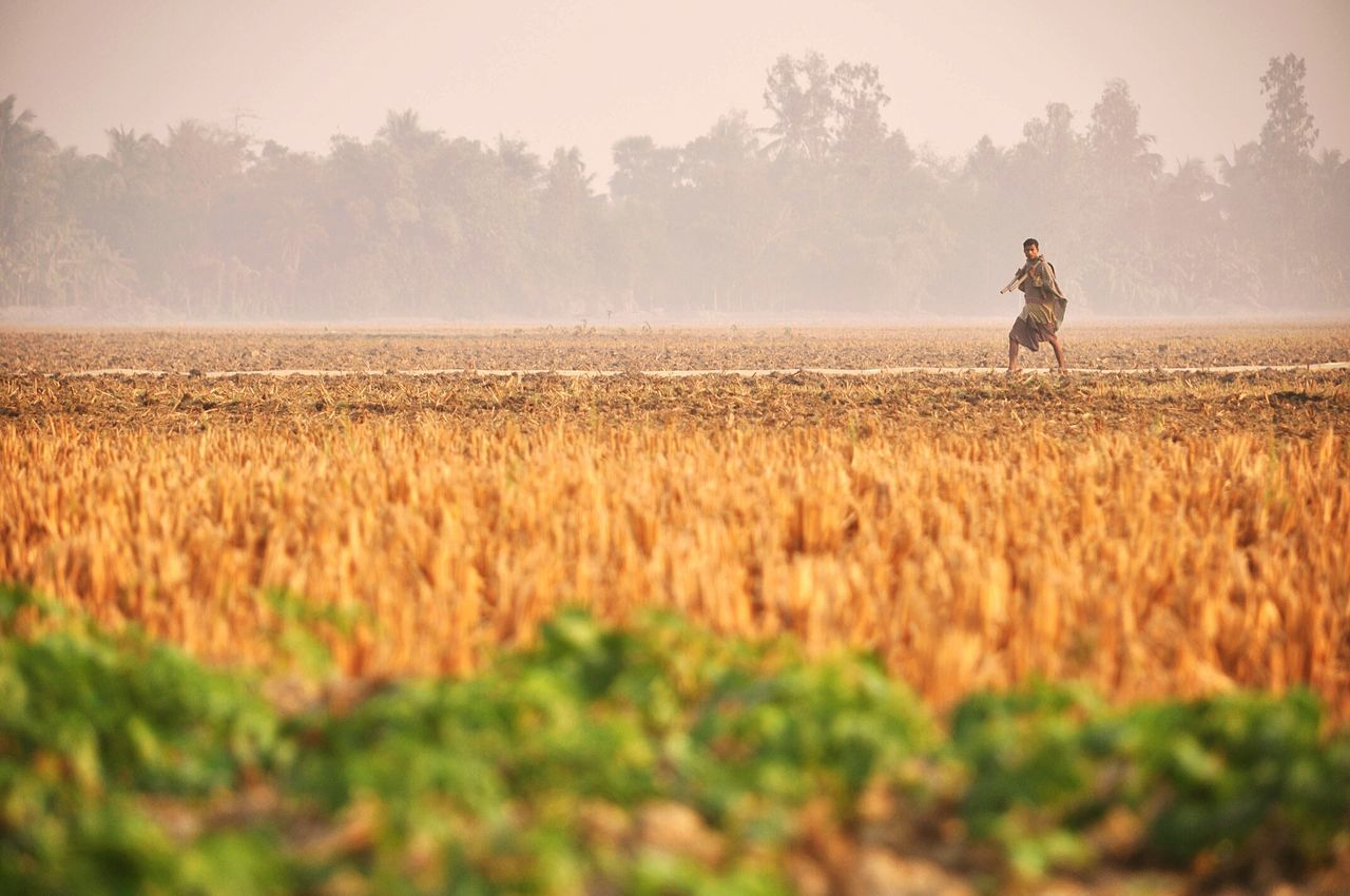 field, agriculture, one person, nature, cereal plant, real people, growth, farm, crop, farmer, wheat, standing, tree, men, landscape, rural scene, day, occupation, outdoors, farm worker, lifestyles, beauty in nature, sky, working, plant, scenics, people