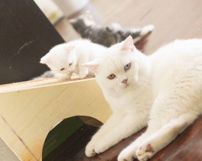 Like father like son Kitten Kittens Cats Cute