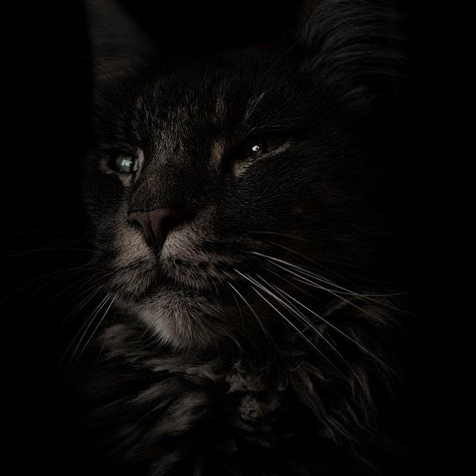 """Vito's cat"" Instalike Instagramhub Instagood Fotografie Picoftheday Photography Photowall_daily Cat Kitty Kitten Animal Pet Cats Catsofinstagram Catstagram Catlover Catoftheday Ig_animals Petstagram Petsofinstagram Lowkey  Sonyalpha"