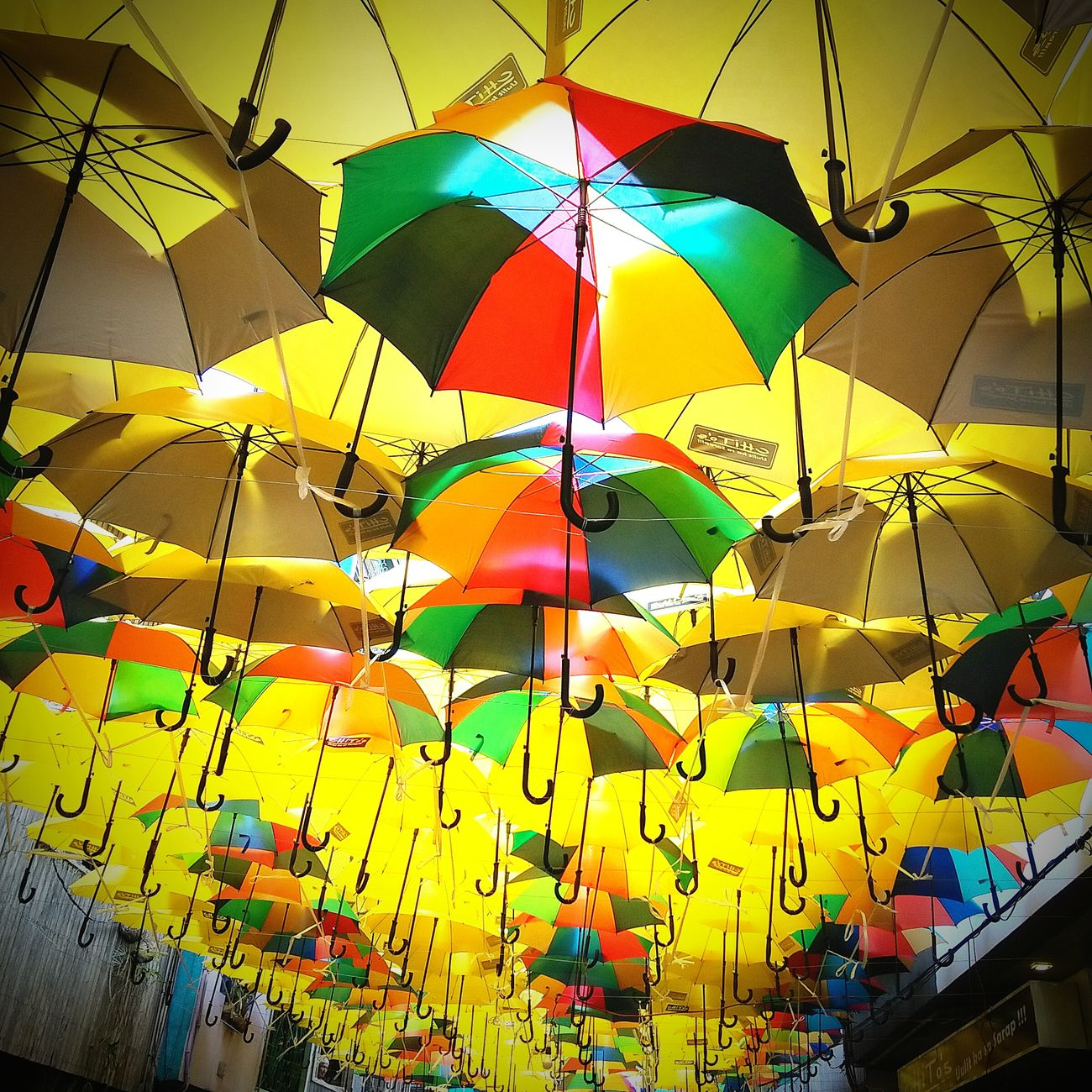 Shade from the Burst Of The Sun during the Pahiyas Festival 2015 in Lucban Quezon .