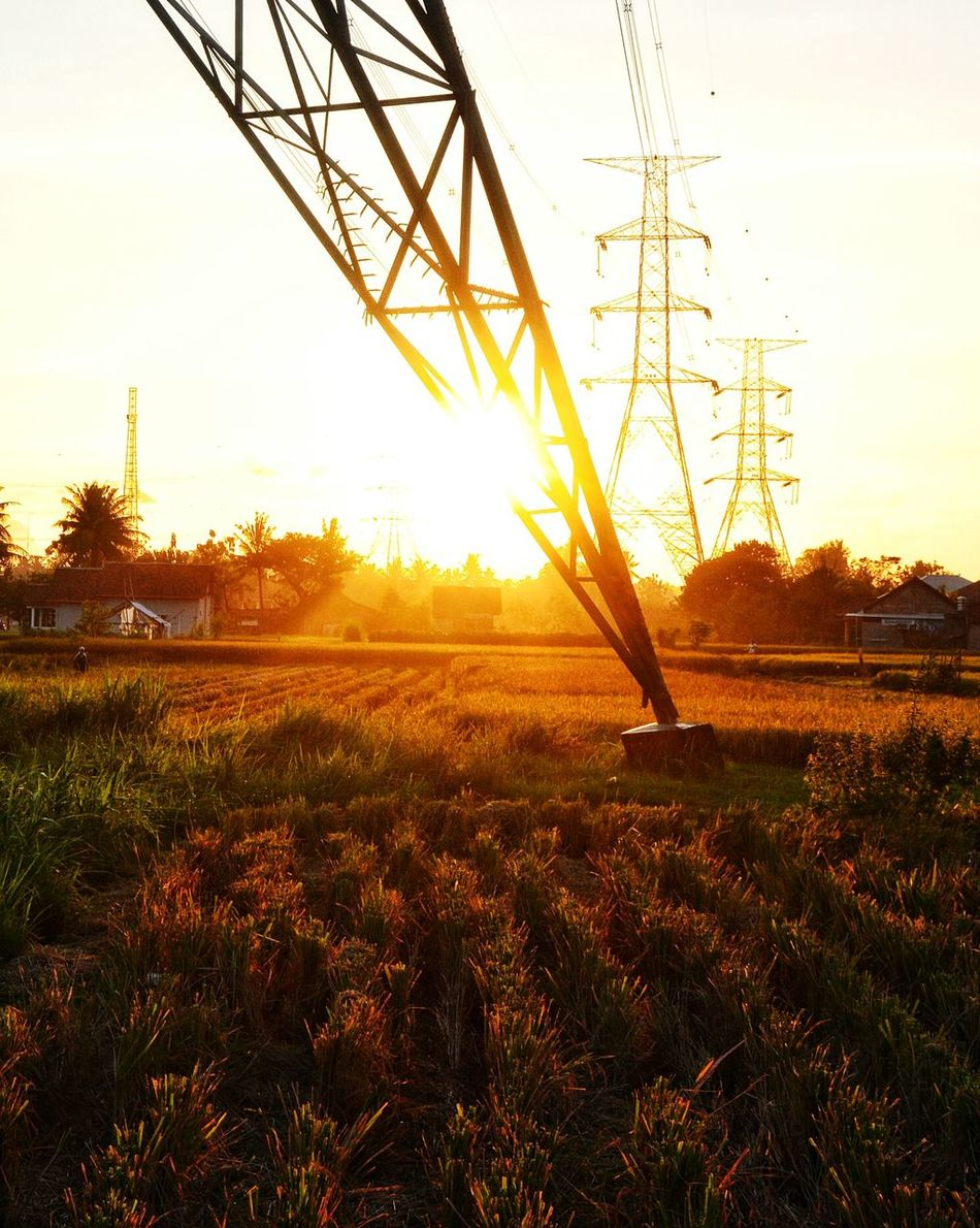 Farmfield Rural Exploration Paddyfield Bacpacker Wanderlust Beauty In Nature Rural Scene Agriculture Leisure Activity GrowthRural Sunset_captures Sunset Silhouettes Tower Electricity  Electricity  Electricity  Electricity  Electricity  Landscape Rice Paddy Farm The Secret Spaces Long Goodbye