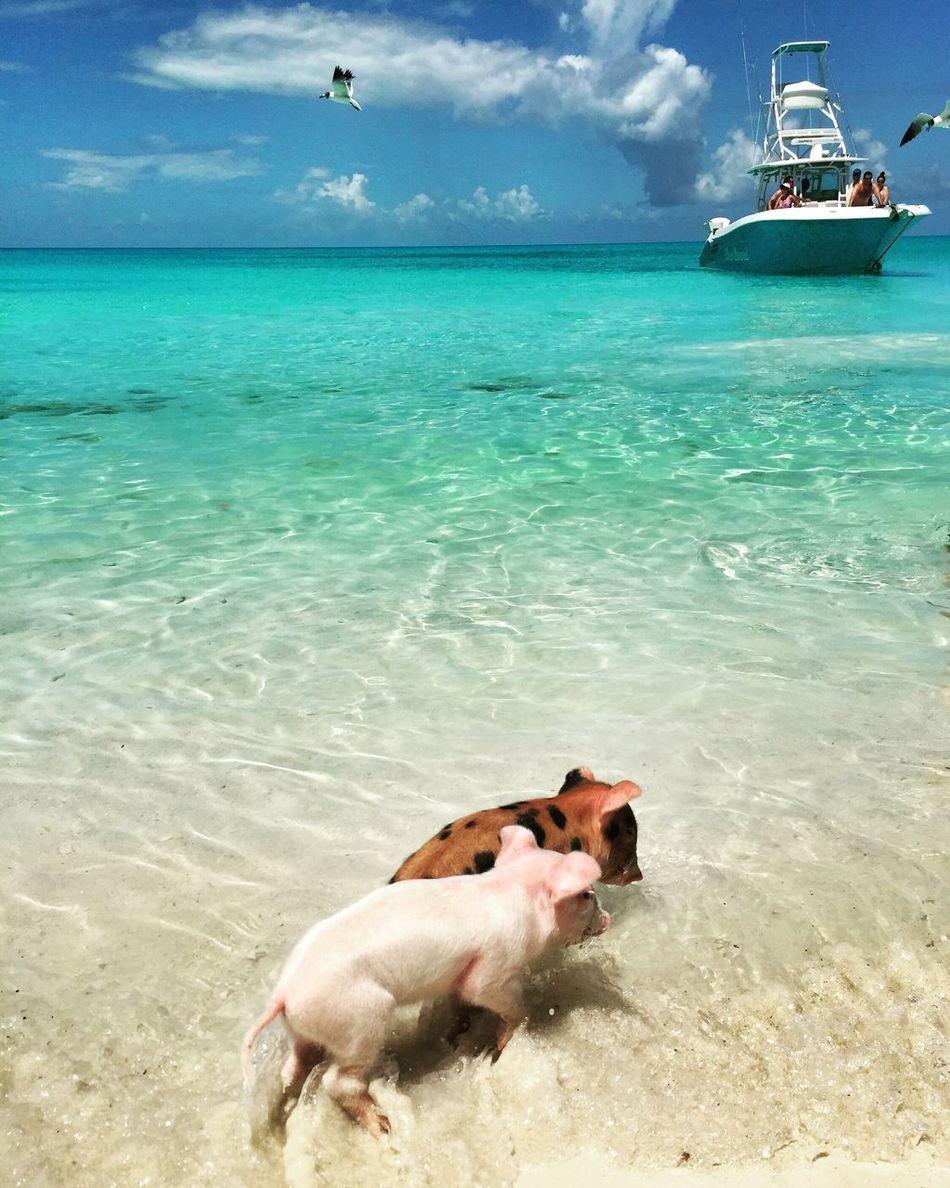 Beautiful stock photos of bahamas, Animal Themes, Beach, Beauty In Nature, Day