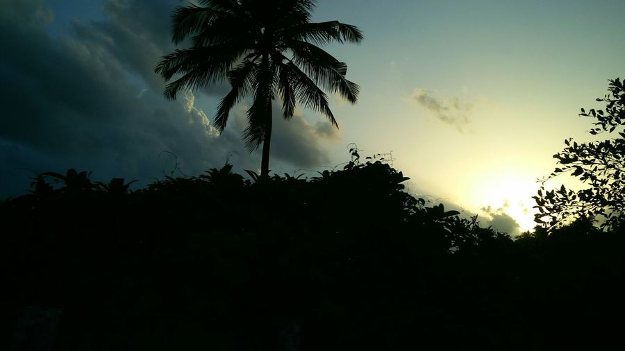 Evening time,sun touching the horizon and making a beautiful scenery as it's rays fall on the cloudsSun TimeLive For The Story Summer Coconut Tree Sky Sunlight Outdoors Peace ✌ Summertime One Summer Evening EyeEm Nature Lover Landscape Clouds And Sky Live For The Story