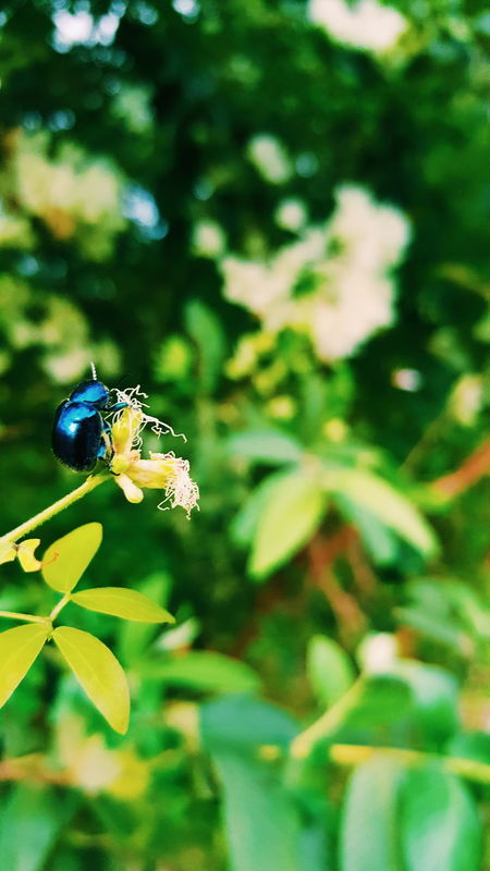 blue Bugs Bugs Life Green Nature EyeEm Nature Lover Eyeem Philippines Eyeem Bug