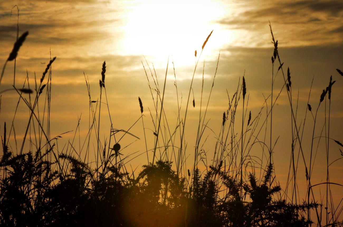 Sunrise Nature Ireland