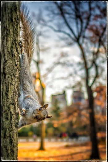 Cute Squirrel Central Park New York