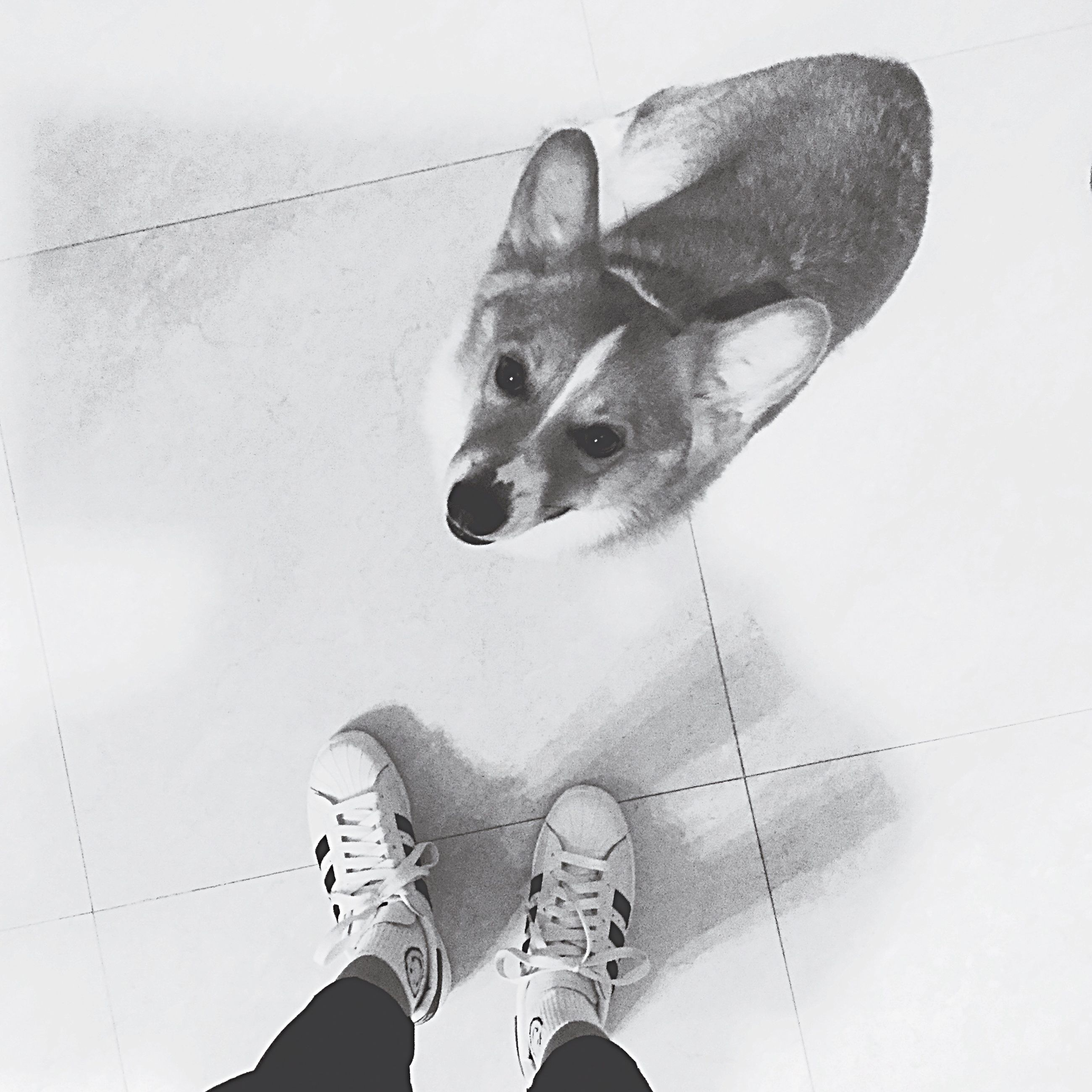 one animal, animal themes, domestic animals, pets, dog, part of, shoe, personal perspective, mammal, unrecognizable person, auto post production filter, lifestyles, men, holding, person, day, leisure activity