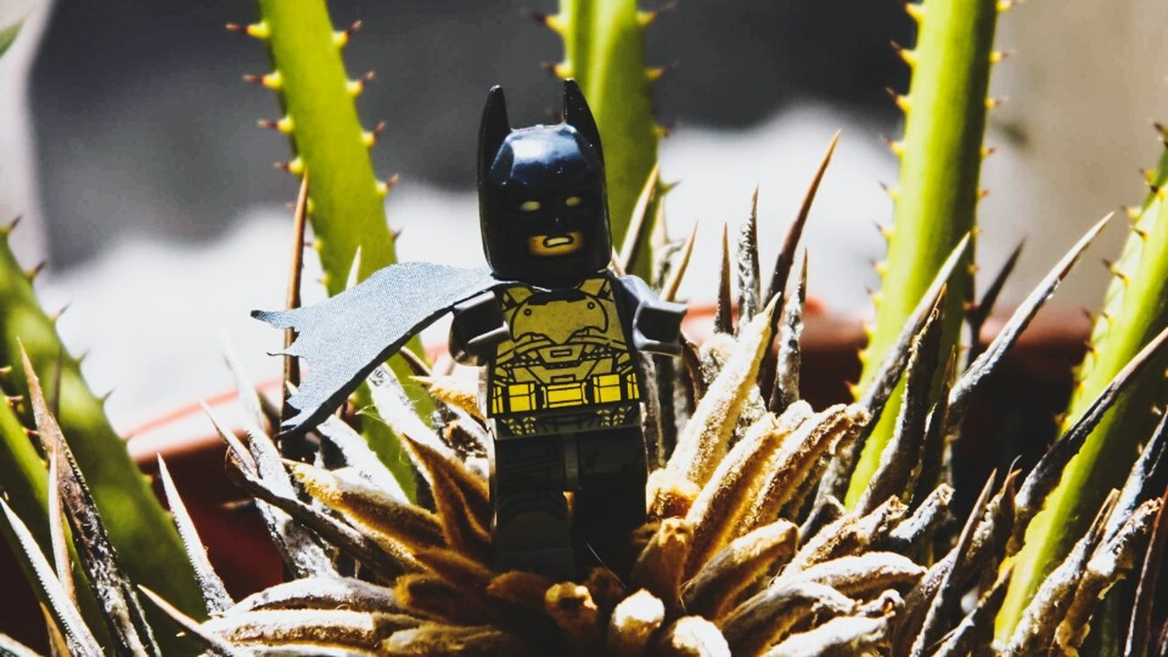 Whare are you batman? Plant Army Nature Batman Dccomics Photographer Photoshoot