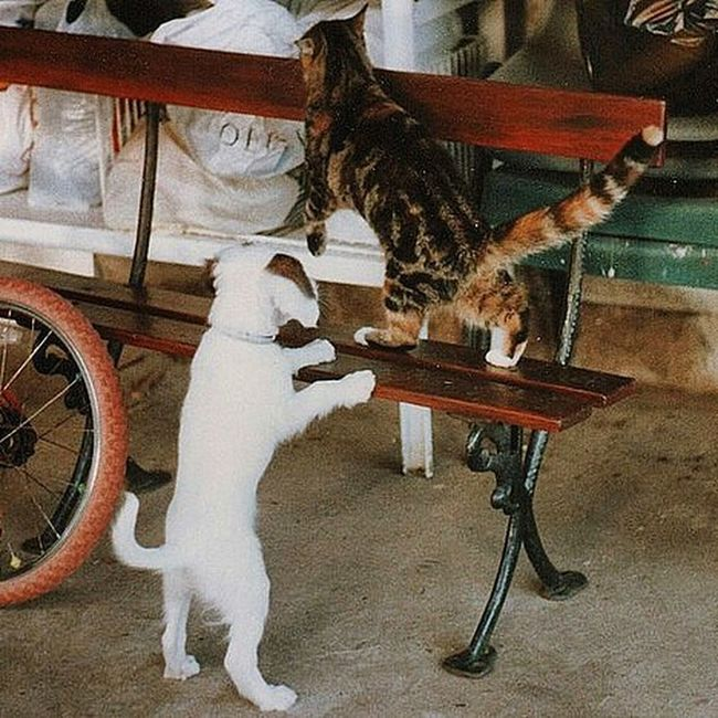 Wow, sometimes a photo really hits home and evokes soo many memories. This is my childhood loves in one small photo. My red BMX bike, Kim the puppy and Molly the cat. Humbling. x Memories Family Love Fowlie Timegoesbysofast Marykirk Home