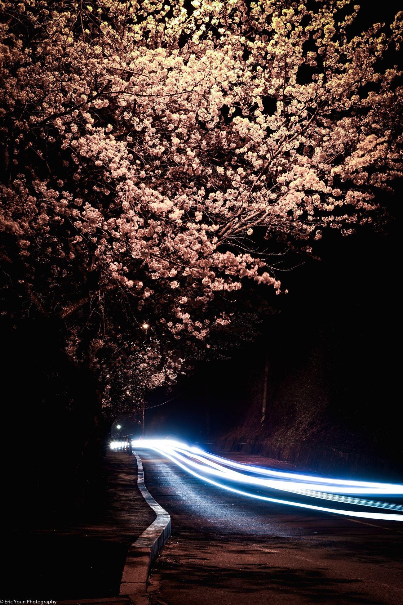Capturing Movement South Korea EyeEm Best Shots Sonya7II Sonyphotography Nature Photography Flower Collection Nature_collection Naturelovers Long Exposure