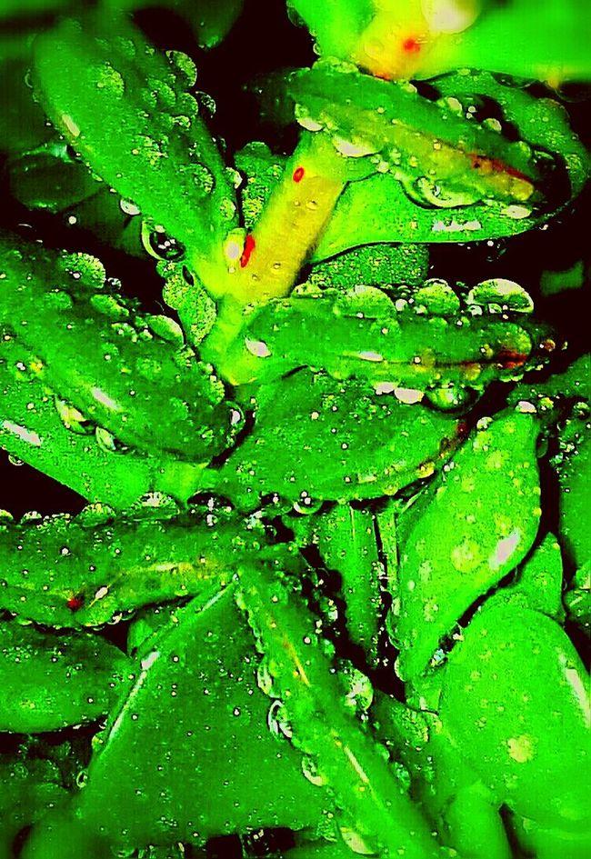 Green Color Nature Plant Botanic Botanicgarden Gocce Di Pioggia Gocce Goccedipioggia  Gocce D'acqua Goccediacqua Goccedipioggia  Plants 🌱 Plant Plants Collection Green Plant Green Green Color Green Green Green!