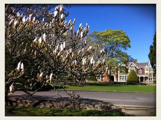 Spring has arrived at Bletchley Park by Shaun Armstrong