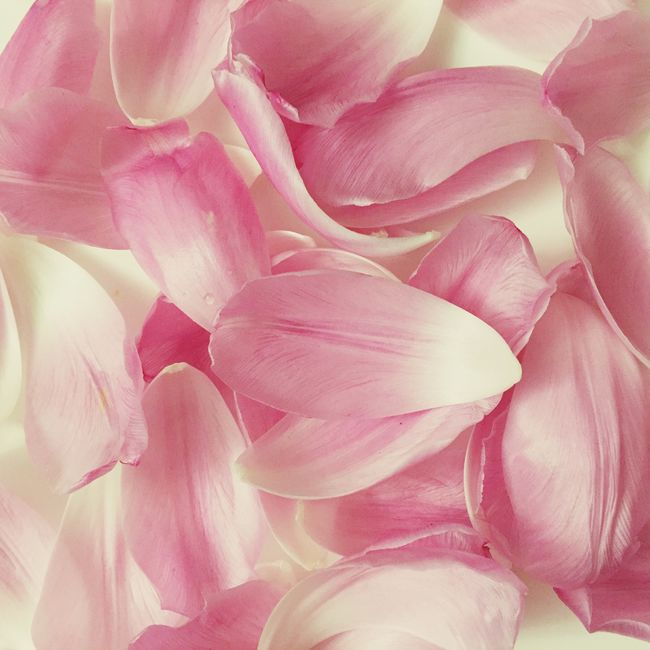 Tulips Petal Rosé Pink Flowers Nature Abundance Full Frame Close-up