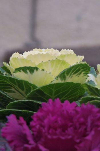 Flowers Flower Habotan Leaves Leaf