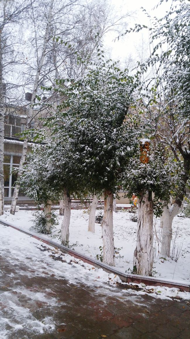 Snowing Beauty In Nature Tree Rainy Season Nature Wet Day No People Water Outdoors Built Structure City Rainfall Architecture Beauty In Nature Sky