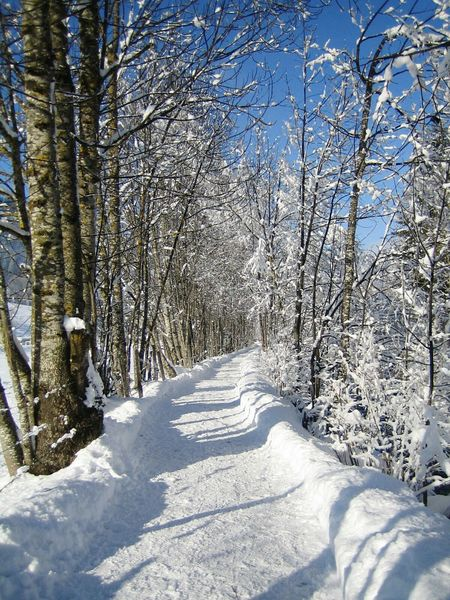 Winter Snow Cold Temperature Nature Beauty In Nature Tree Outdoors No People Landscape Tranquility HJB Way To Go Wintertime Winter_collection Winter Landscape