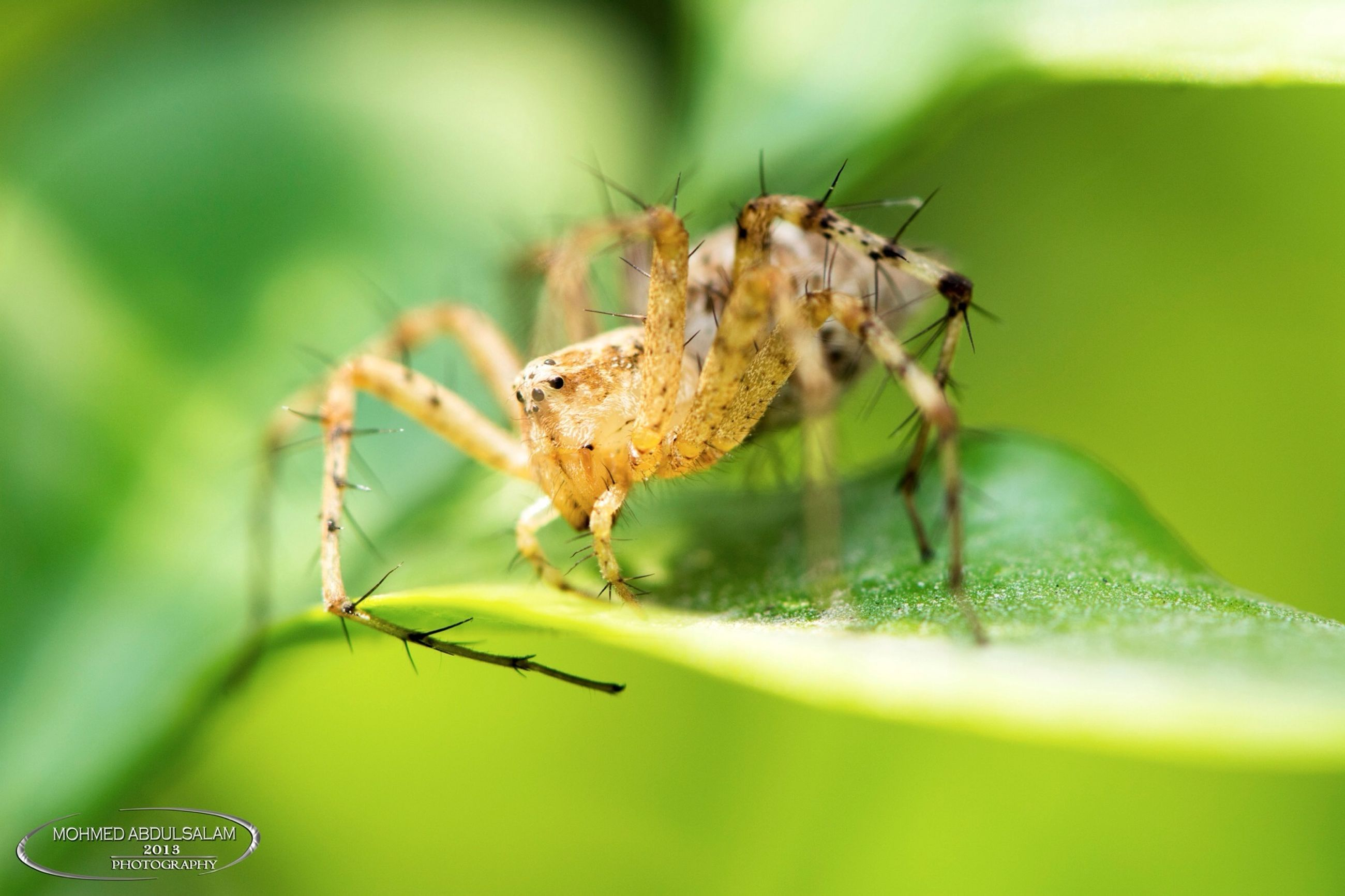 animal themes, animals in the wild, insect, one animal, wildlife, close-up, focus on foreground, selective focus, spider, green color, nature, zoology, day, full length, arthropod, leaf, outdoors, no people, plant, dragonfly