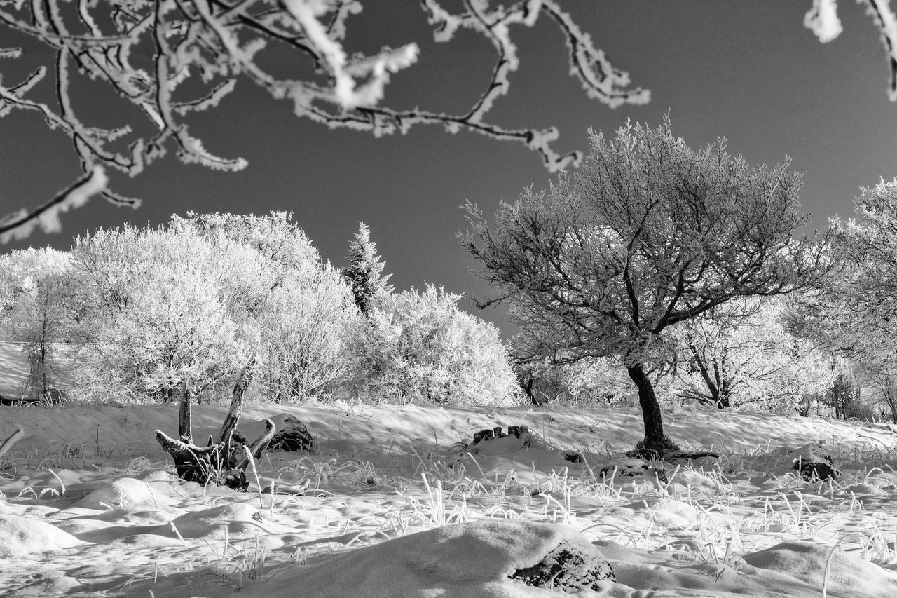 Winter landscape - Tree Nature Tranquility Beauty In Nature Landscape Branch Tranquil Scene Scenics Idyllic Winter Hello World Monochrome Photography First Eyeem Photo Exceptional Photographs EyeEm Best Shots - Black + White The Week Of Eyeem EyeEm Masterclass Monochrome Cold Temperature Blackandwhite Black & White Black And White Snow Eye4photography  Frosty