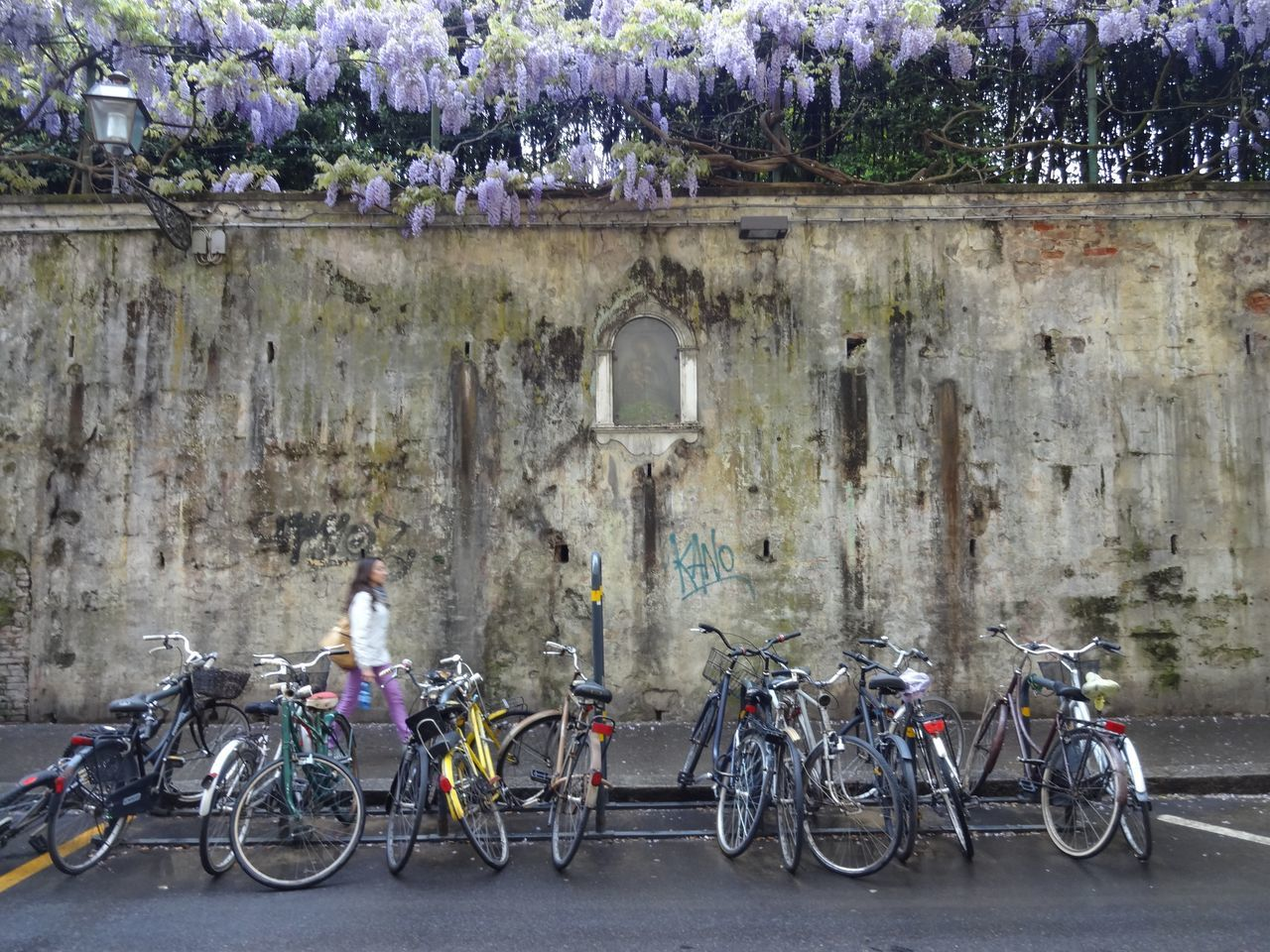 #bikes #Florence #italy #Natural Bicycle Outdoors Street Travel